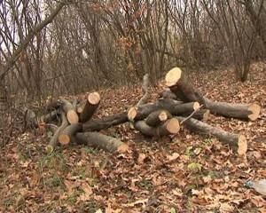 lemne bun