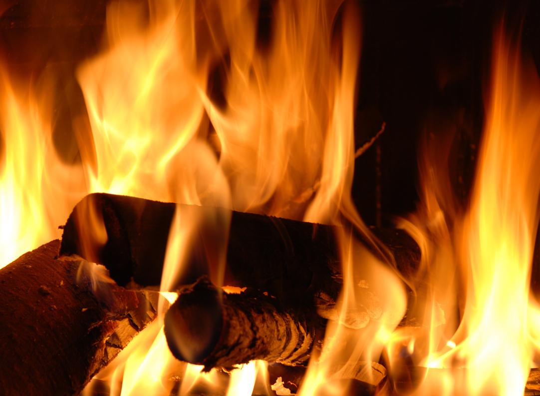 foc-copaci-flacari