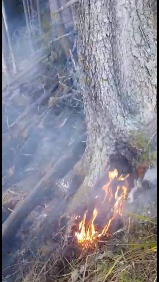 incendiu munte