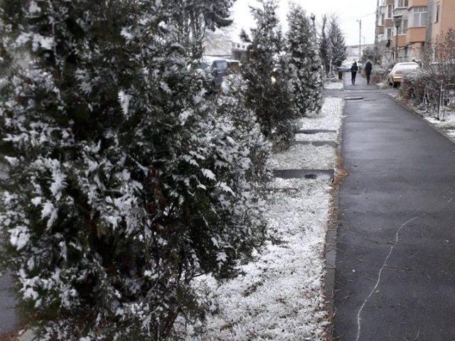 Ninge la Făgăraș