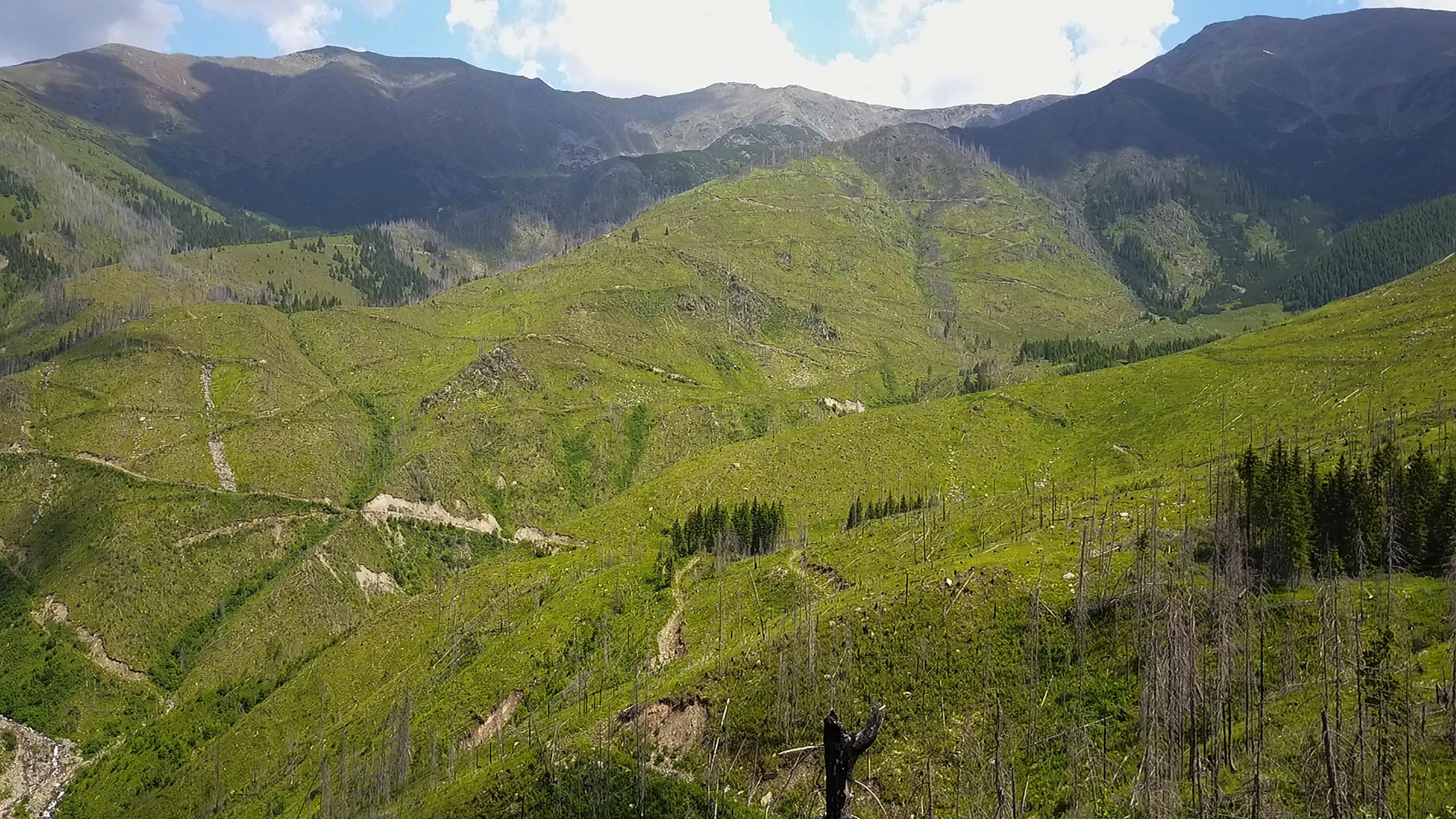 illegal logging site fagaras (2)