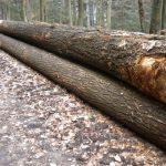 Dosar penal pentru tăiere ilegală de arbori și furt de arbori