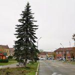 La Făgăraș nu se vor mai împodobi brazi tăiați pentru sărbătorile de iarnă