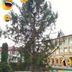 Bradul de Crăciun din centrul orașului Victoria, motiv de indignare pentru cetățenii orașului