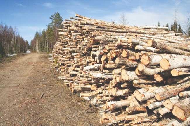 lemne garda forestiera