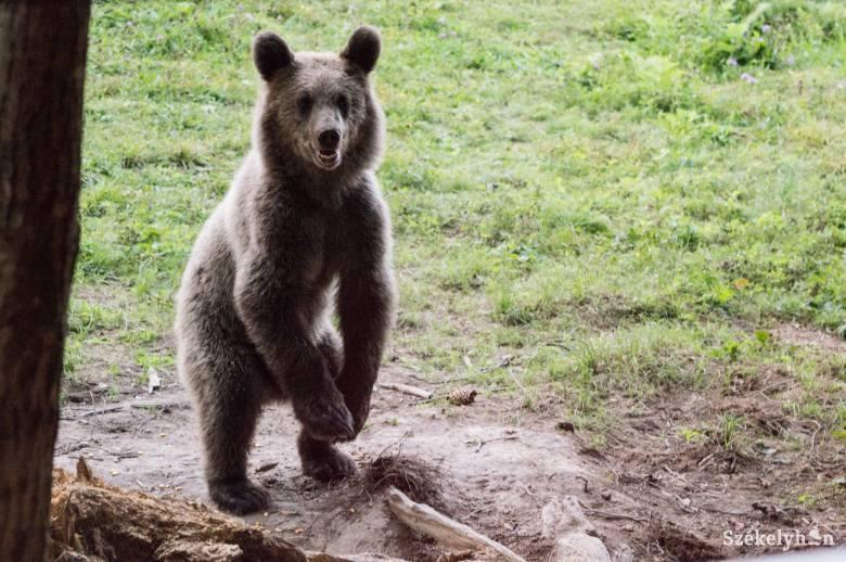 Urs-Tusnad